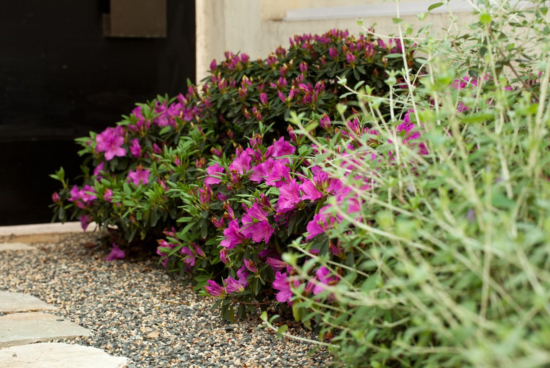 Shanghai garden 私人花园