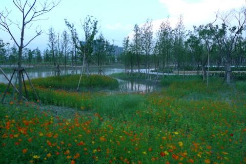 jiading wetland park